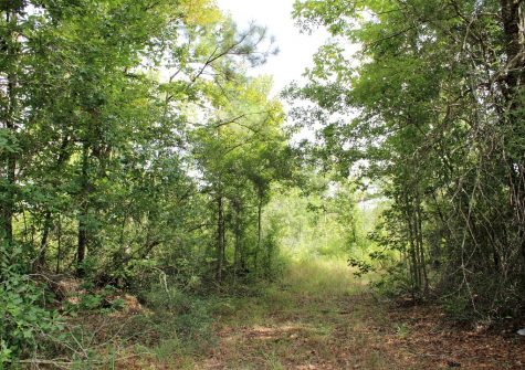 37.5 acres / 000 E Hwy 190, Woodville