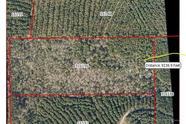 000 Timber Road 3, Colmesneil