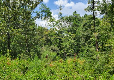 TBD E Hwy 190 (35.53+/- acres), Woodville